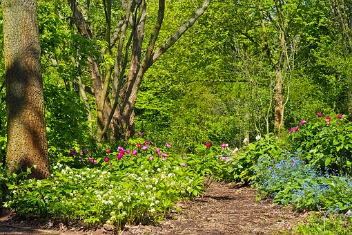 Sistemas «Forest gardens»