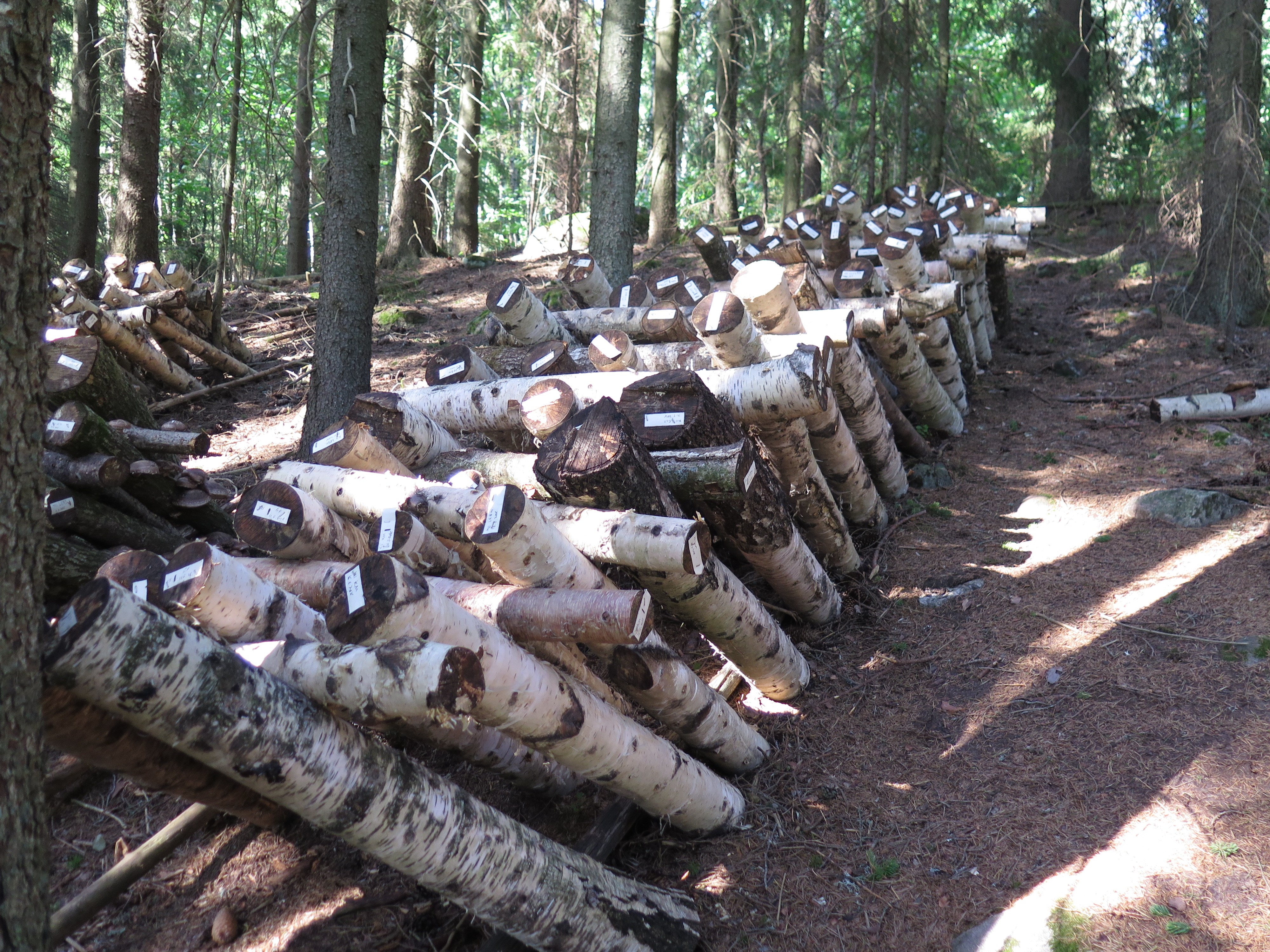 Mushroom cultivation brings additional income to forest