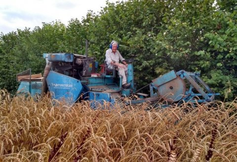 Martin in his element on the plot combine at Wakelyns