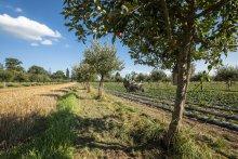 Photo by: Gabriela Brändle, Agroscope